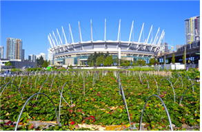 [그림 1] 솔푸드 프로젝트의 경기장 주변 경작지